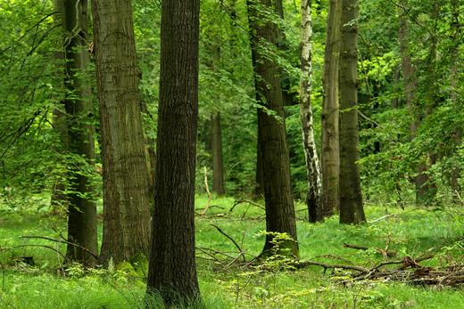 Thema Umwelt | Jagd